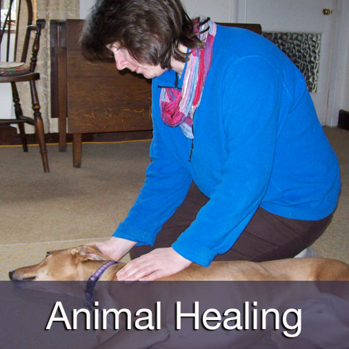Mindful Animal Healing